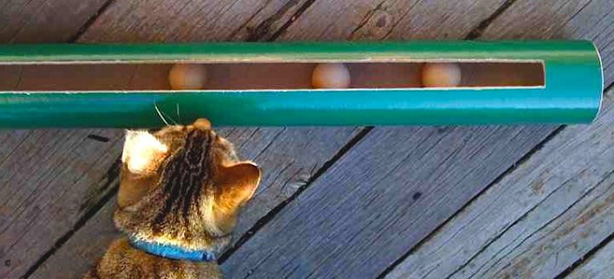 The Great Green Cat Toy: Eco-Friendly Feline Fun