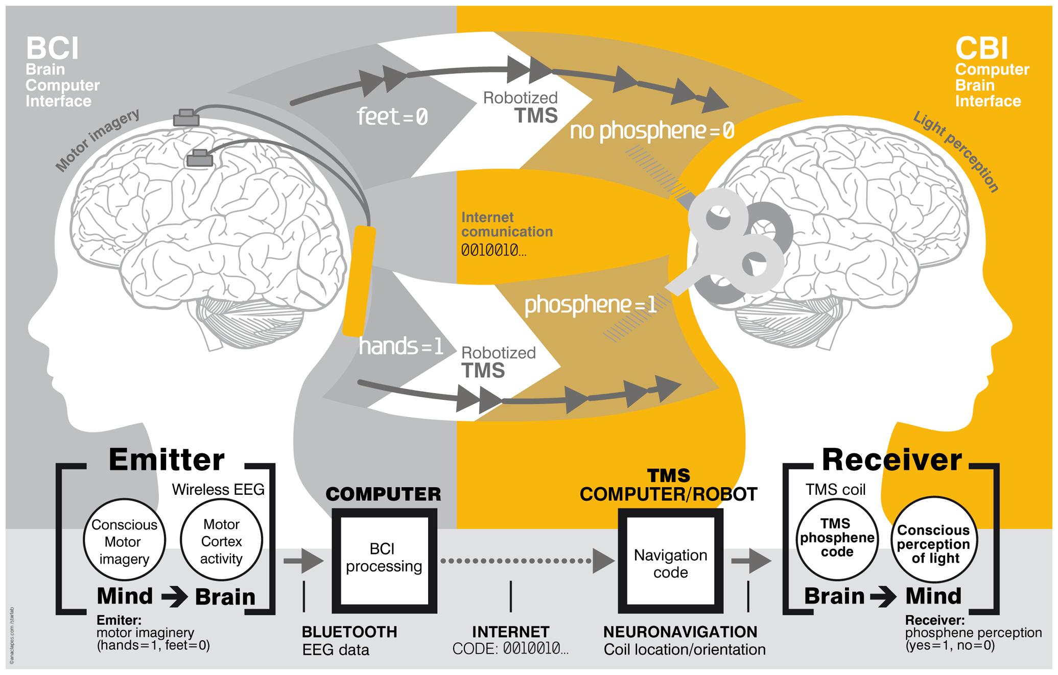 Brain-to-brain interface diagram